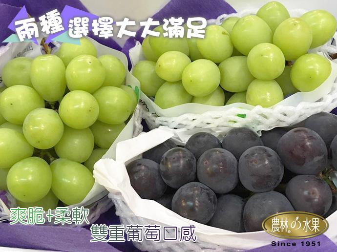 日本麝香葡萄 日本貓眼葡萄 日本葡萄