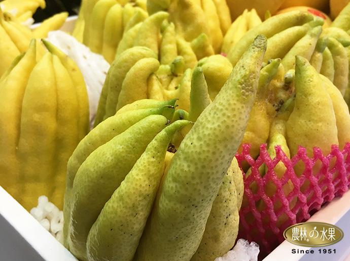佛手柑 台灣水果 當季水果