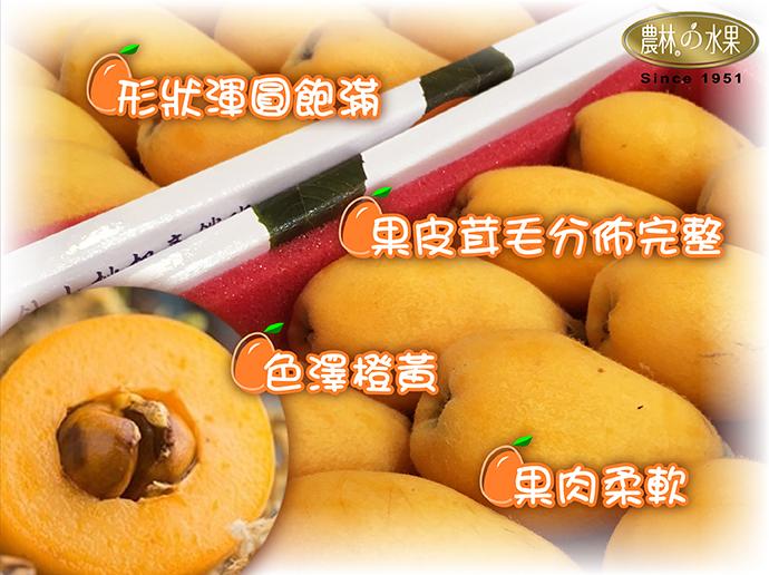 枇杷 台東枇杷 台灣水果