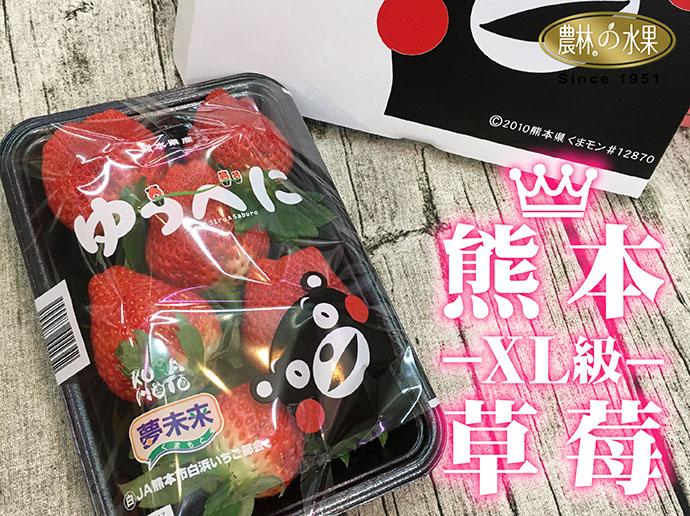 日本草莓 熊本草莓 草莓訂購