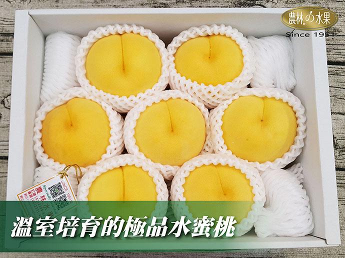日本水蜜桃 日本黃金桃 日本黃金水蜜桃 日本溫室黃金水蜜桃